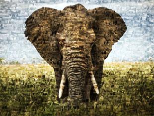 Fotomozaiek van foto met olifant