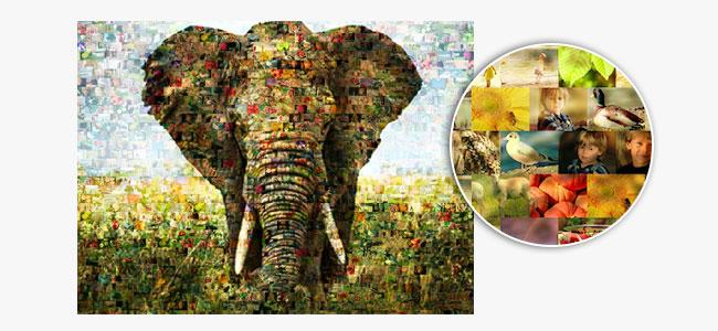 Hoofdfoto en enkele fotos van een fotomozaiek met olifant
